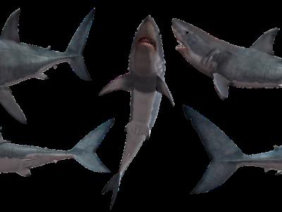 Wasser – Im Visier der Finanzhaie